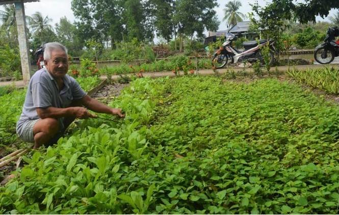 Lan tỏa phong trào nông dân sản xuất giỏi