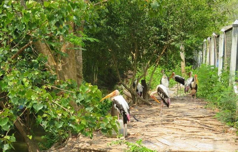 Vườn chim Bạc Liêu hiện có hơn 100 loài chim với hơn 60 ngàn cá thể, nổi tiếng ở ĐBSCL.
