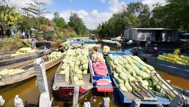 Cà Mau xác minh vụ nợ trên 1,3 tỷ đồng mua lúa của người dân