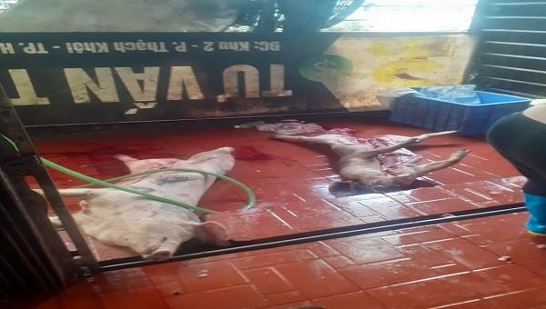 Lợn thịt đã chết bốc mùi hôi thối tại cơ sở giết mổ