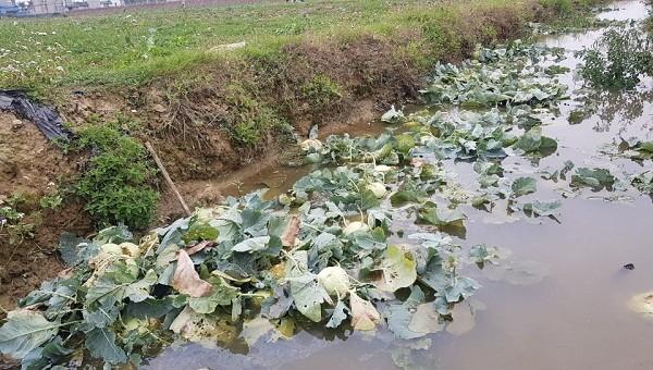Khoảng 90.000 tấn công sản của tỉnh Hải Dương bị ảnh hưởng bởi dịch Covid-19.