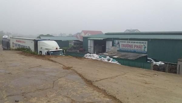 Mặt đê bị nứt vỡ do xe quá tải của cơ sở chế biến nông sản Trường Phát.