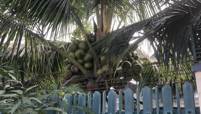 Giả thương lái, bắt cóc chủ vườn dừa 'tống tiền' 4 tỉ đồng