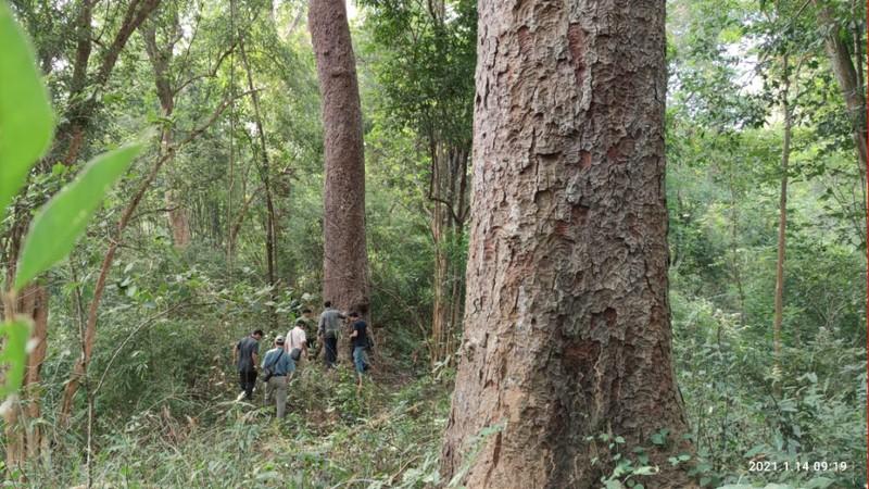 Chiêm ngưỡng hàng ngàn cây Lim xanh ở rừng Sông Móng – Capét