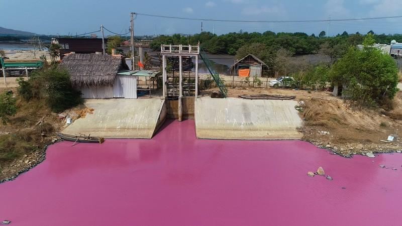 Đầm chứa nước trước cống số 6 bất ngờ đổi màu hồng
