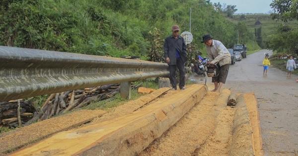 Công nhân dùng máy cưa để cắt nhỏ những phách gỗ to trước khi đưa lên xe cẩu
