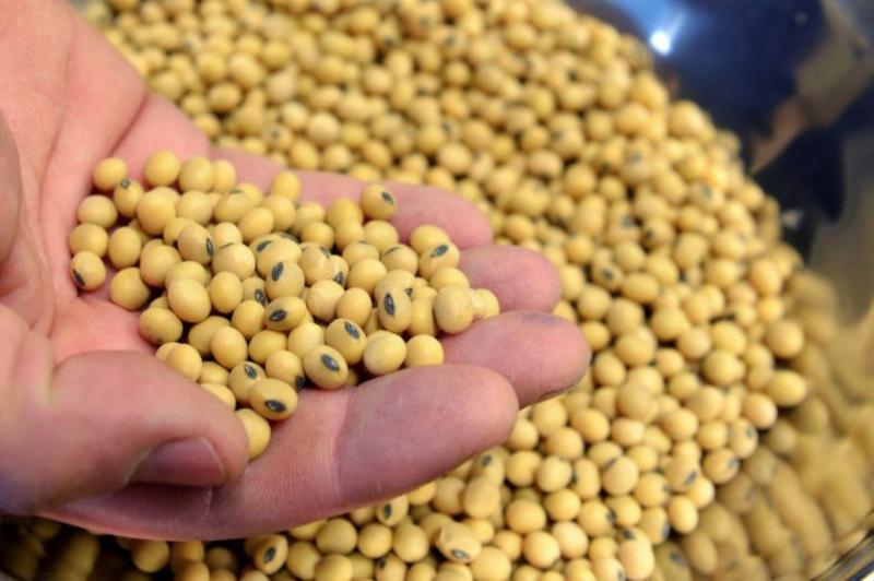 Nông dân Mỹ 'mòn mỏi' chờ đợi lời hứa Trung Quốc mua đậu nành
