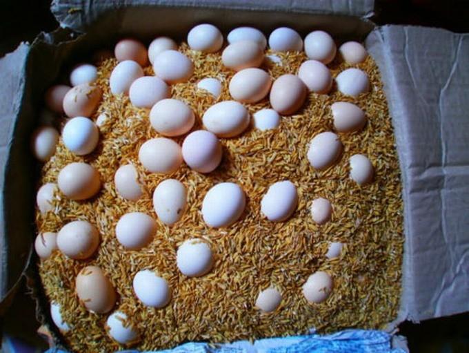 Kết quả hình ảnh cho trấu khô trứng
