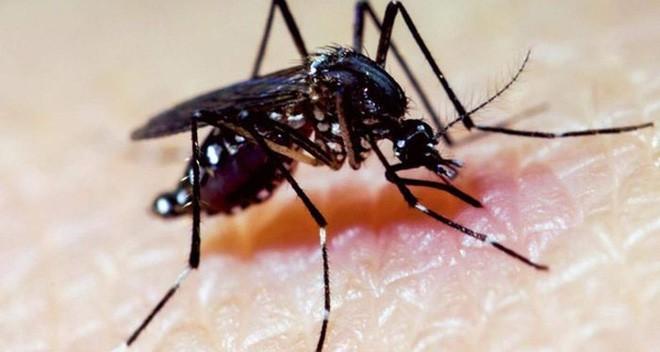 Kết quả hình ảnh cho đặc điểm muỗi zika