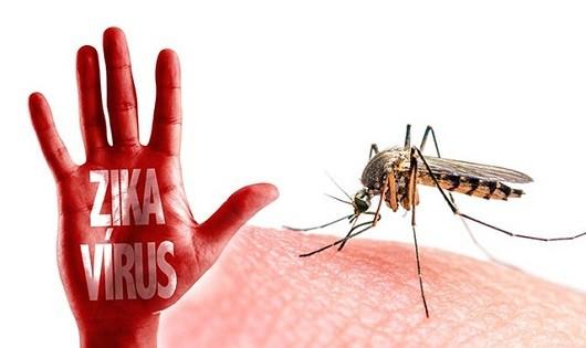 Xét nghiệm tìm cá thể muỗi nhiễm vi rút Zika tại Hà Nội