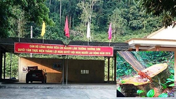 Phát hiện thêm một vụ phá rừng nghiêm trọng tại Quảng Bình
