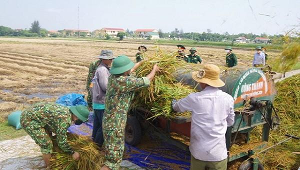 Các cán bộ chiến sĩ và người dân cùng nhau thu hoạch lúa trong không khí quân dân vui vẻ, gắn kết.
