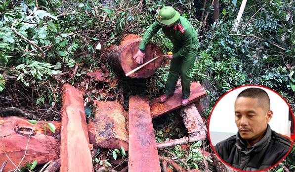 Bắt giữ 5 đối tượng phá rừng khai thác gỗ quý trái phép tại Quảng Bình