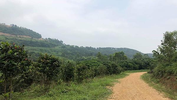 Vĩnh Phúc: Không có hiện tượng khai thác đất tại  khu vực núi Đinh và núi Đúng