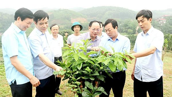 Phú Thọ đẩy mạnh phát triển nông nghiệp đặc sản