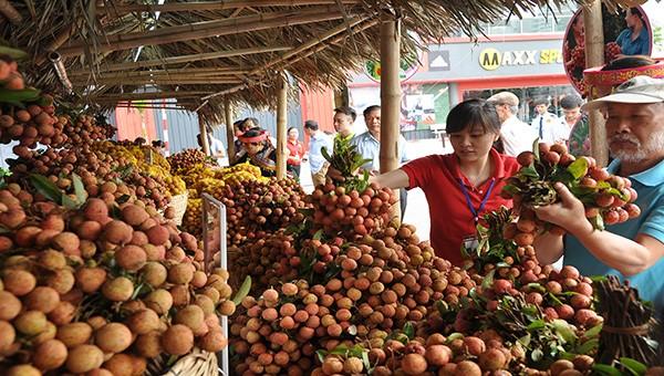 Bắc Giang sẵn sàng đưa quả vải lên đường xuất ngoại