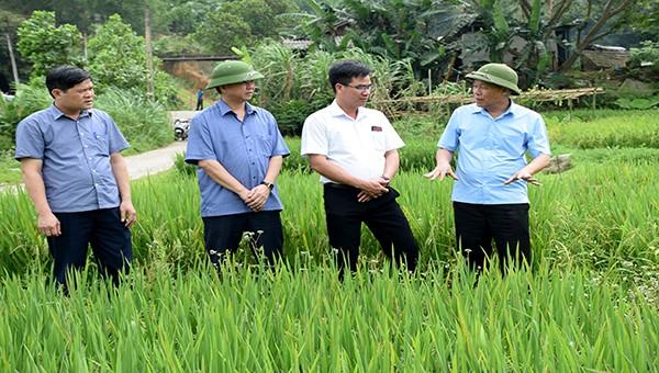 Phó Chủ tịch Yên Bái chỉ đạo quy hoạch, bố trí quỹ đất để xây dựng các khu tái định cư