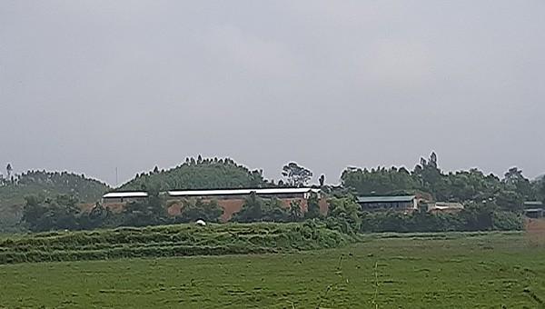 Trang trại được xây dựng trên đất rừng trồng sản xuất.