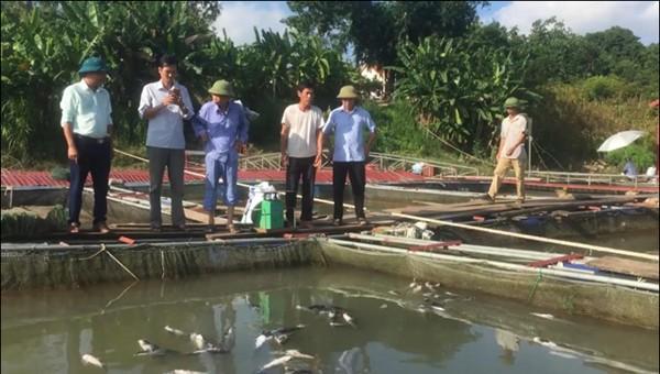 UBND huyện Thanh Thủy đã chỉ đạo Phòng NN&PTNT kiểm tra nắm bắt tình hình.