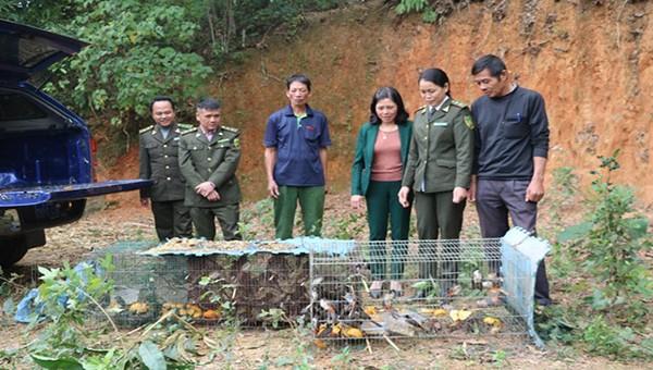 Cao Bằng: Hơn 200 cá thể chim hoang dã quý hiếm được thả về rừng