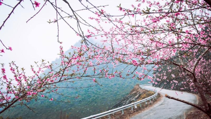 Du lịch Tây Bắc qua những sắc hoa