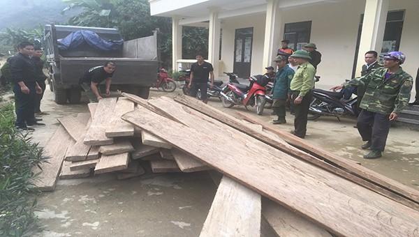Hà Giang: Kiểm lâm thu giữ gần 3.500m3 gỗ nghiến khai thác lậu