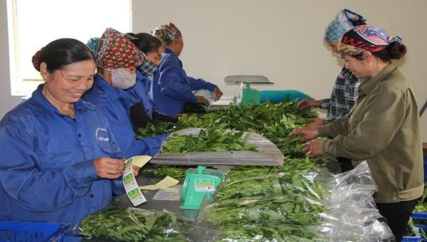 Bắc Giang: Hỗ trợ liên kết sản xuất và tiêu thụ sản phẩm nông nghiệp