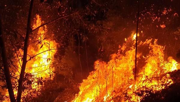 """Điều tra nguyên nhân 4ha rừng bị """"bà hoả"""" thiêu trụi"""