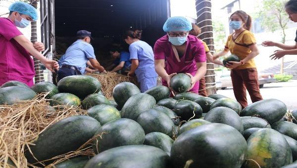 """Những xe """"giải cứu"""" chở dưa hấu về Hà Nội được cộng đồng chung tay giúp đỡ với giá phi lợi nhuận."""