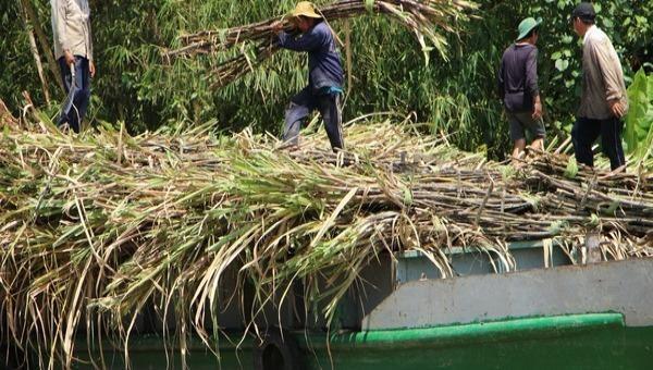 Áp dụng biện pháp phòng vệ, tăng cường chống buôn lậu để bảo vệ ngành mía đường