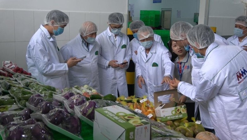 Thương vụ Việt Nam tại Singapore phối hợp Vietnam Airlines hỗ trợ xuất khẩu khoai lang, dưa hấu…