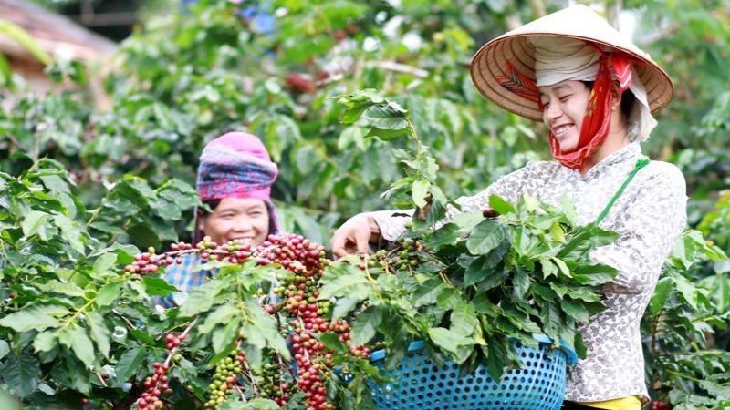 Trong 3 tháng đầu năm 2020, xuất khẩu hạt tiêu của Việt Nam sang Ấn Độ  đạt 10,36 triệu USD