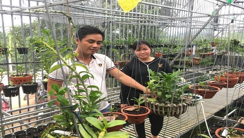 Việc trồng, chăm sóc hoa lan rừng đã giúp chàng trai dân tộc Tày có thu nhập hàng trăm triệu đồng mỗi tháng.