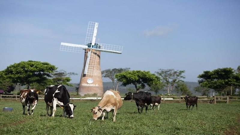 Trang trại Vinamilk Organic Đà Lạt đạt chuẩn hữu cơ châu Âu đầu tiên tại Việt Nam.
