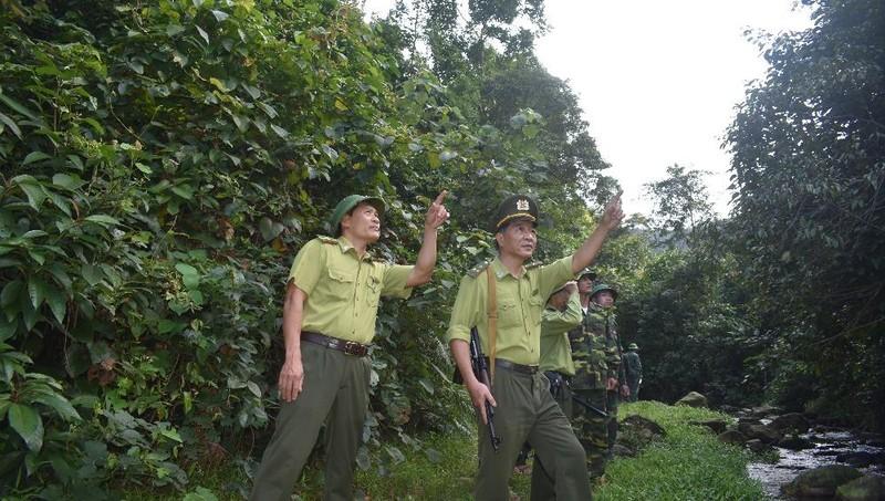 Quảng Bình: Tăng cường quản lý, bảo vệ rừng để phát triển rừng bền vững