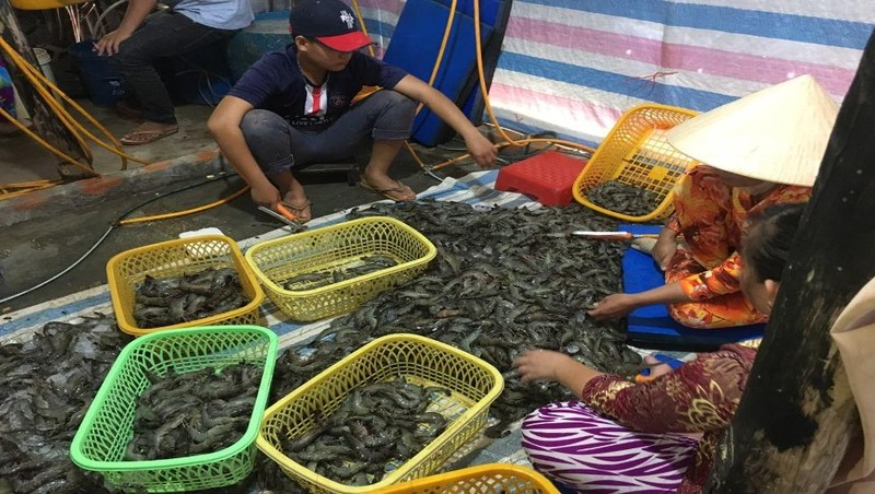 Phát hiện gần 80kg tôm tươi được bơm hoá chất ở Kiên Giang
