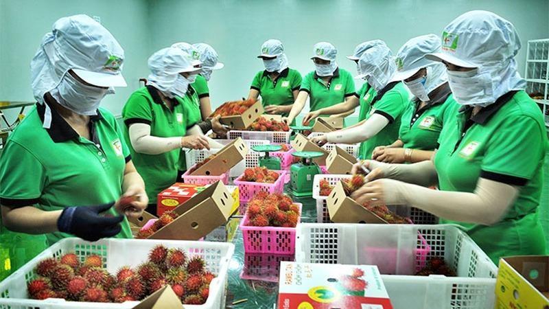 Thương mại Việt – Anh tăng trưởng ngoạn mục ngay sau khi UKVFTA có hiệu lực