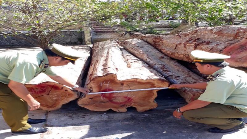 Phát hiện gần 27.000 m3 gỗ không có hồ sơ lâm sản hợp pháp tại Tiền Giang