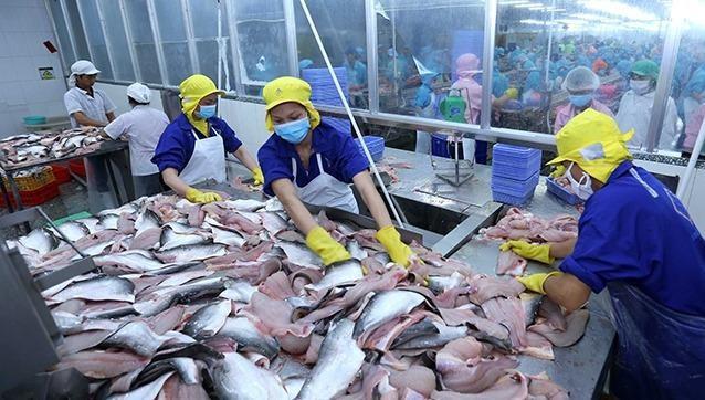 Năm 2020, có gần 145 doanh nghiệp, hợp tác xã xuất cá tra sang thị trường Trung Quốc, 40 doanh nghiệp xuất khẩu sang thị trường Hồng Kông.