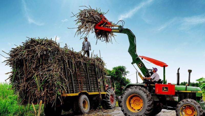 Ngành mía đường trong nước gặp nhiều khó trước sức ép cạnh tranh đường giá rẻ từ Thái Lan.