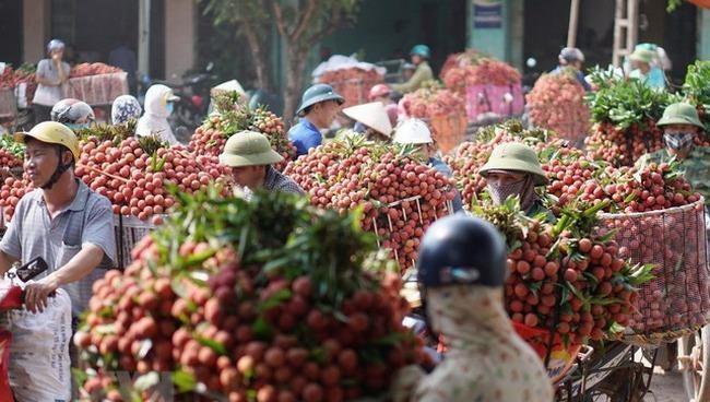 Bộ Công an đồng ý cho 164 thương nhân Trung Quốc được vào Việt Nam mua vải thiều