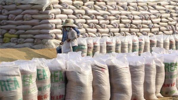 Gạo Việt Nam xuất khẩu sang Anh đều mang thương hiệu của nhà phân phối