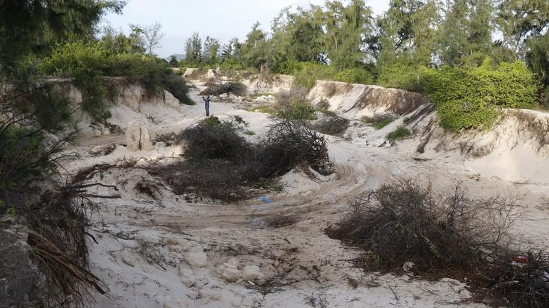 Hiện trường khai thác cát trái phép tại rừng dương ở Mỹ Hòa.