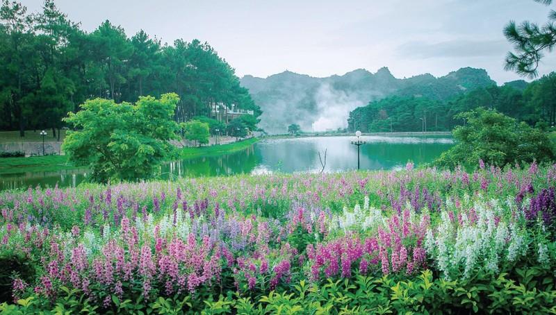 Khu du lịch Rừng thông bản Áng- Điểm đến không thể bỏ qua