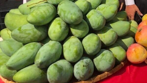 Sơn La quảng bá xoài và nông sản tại Hà Nội