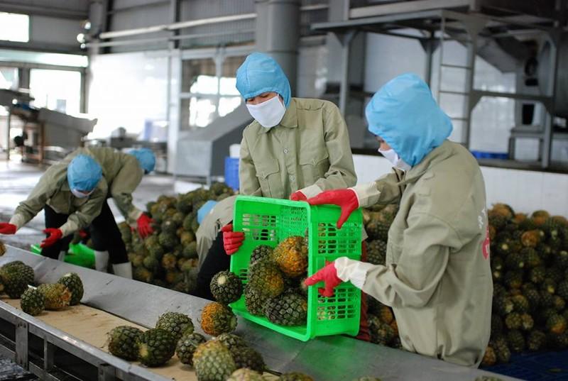Xuất khẩu nông sản đạt kỷ lục hơn 36,3 tỷ USD