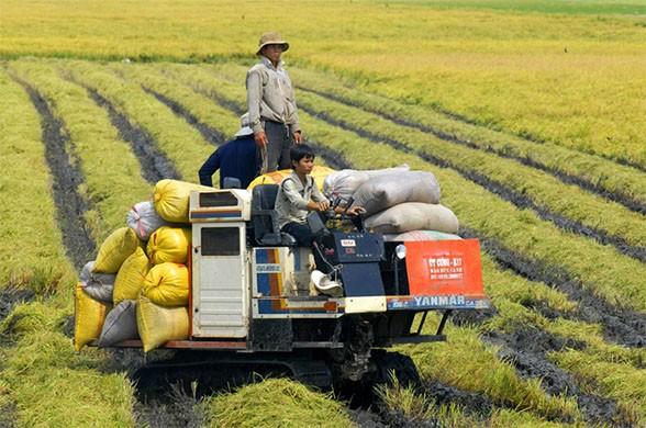 Khó tích tụ đất đai khiến nhiều doanh nghiệp không mặn mà đầu tư vào nông nghiệp do có nhiều rủi ro (Ảnh minh họa)