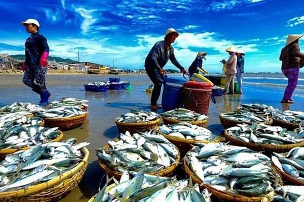 """Thời hạn cuối của """"thẻ vàng"""" mà Ủy ban Châu Âu (EC) áp dụng đối với hoạt động khai thác thủy sản của Việt Nam đang đến gần"""