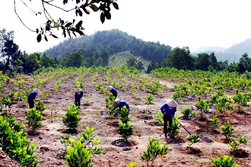 Nhiều địa phương trồng rừng vượt kế hoạch