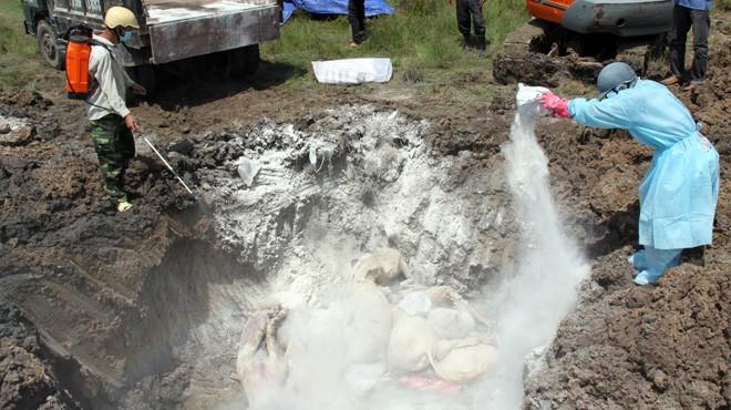 Hỗ trợ thiệt hại dịch tả lợn châu Phi ở Bắc Ninh: Người dân được hướng dẫn lên Hà Nội đòi quyền lợi?